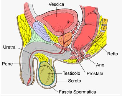 l esame prostata urologo
